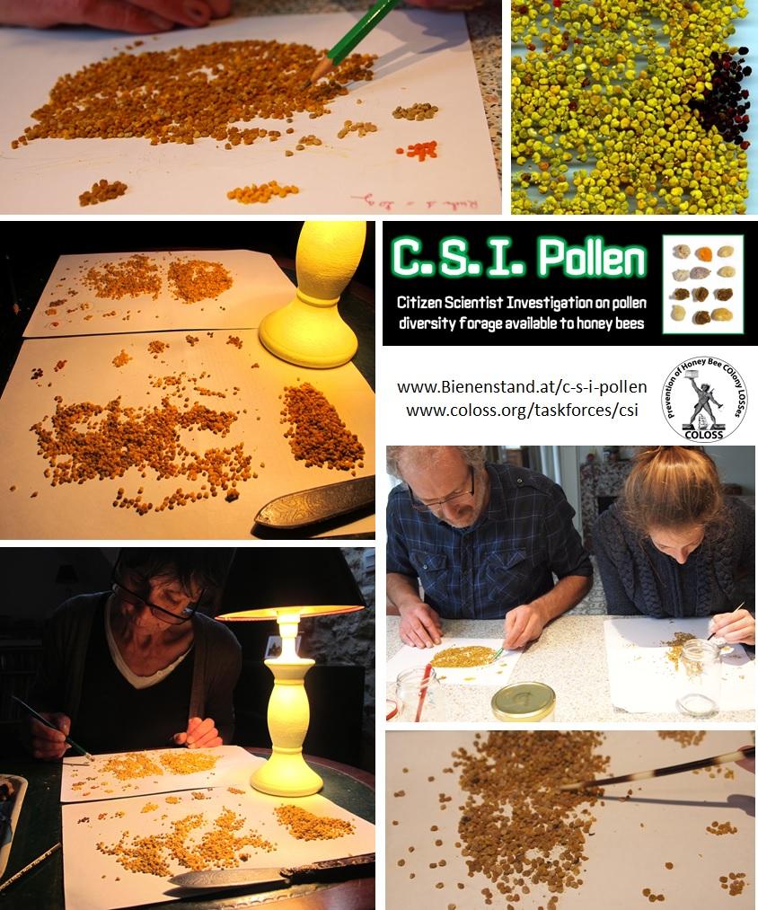 CSIPollen2014a